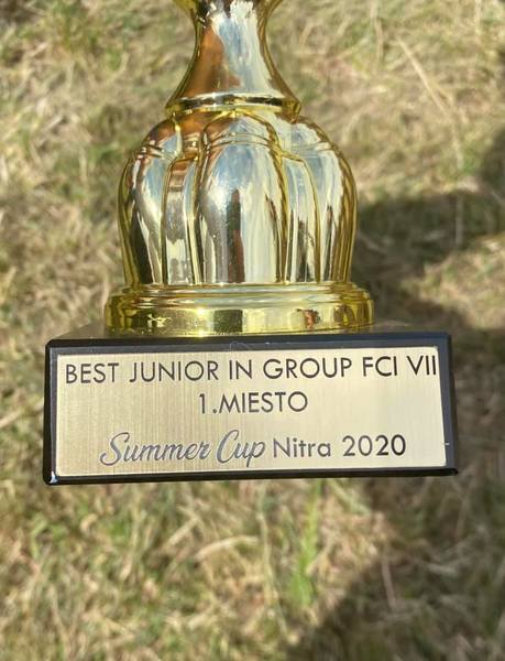 junior-best-in-group-pointer
